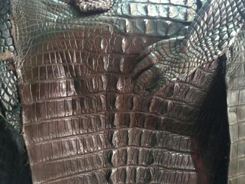nhận biết da cá sấu thật