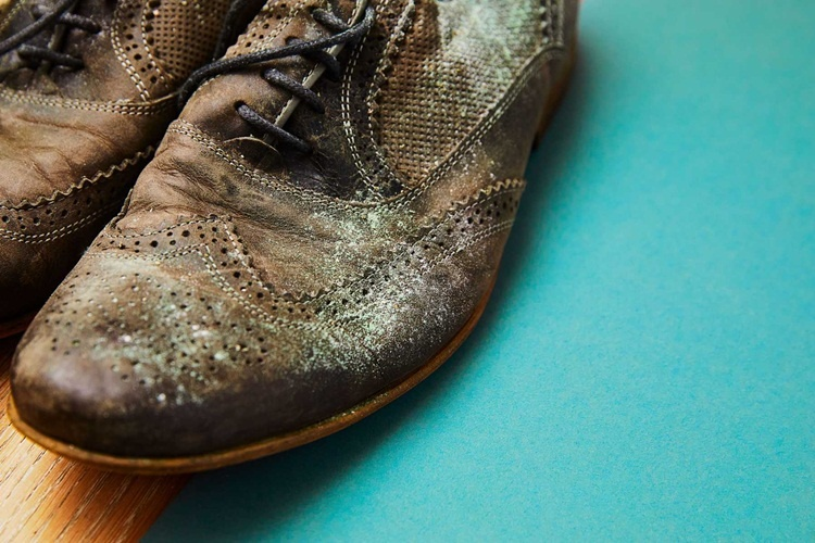 Photo of Cách vệ sinh giày da lộn hiệu quả và nhanh chóng